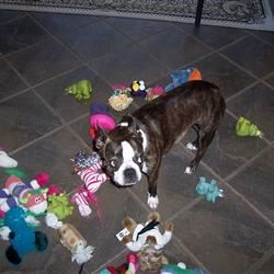 Don't even think about touching my toys!!!