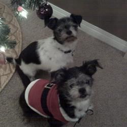 Diva and Snoop Ready for Christmas