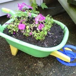 Colorful wheelbarrow.