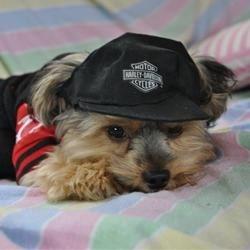My Biker Puppy!!! COOL!!!