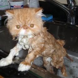 Hector kitty getting a bath