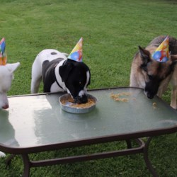 Doggie Birthday Cake