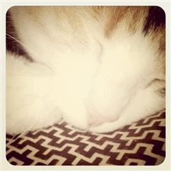 Millie, My Sleeping Beauty