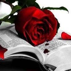 Bible & Rose