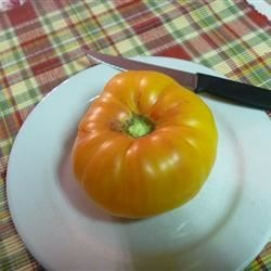 Heirloom Pineapple tomato