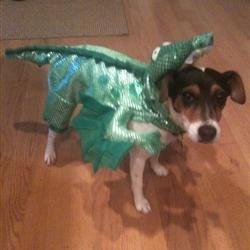 Tina the dragon