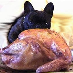 turkey Frenchie