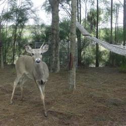 Deer came for a visit!