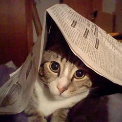 Rocket Under Newspaper