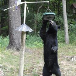 He's a Hungry Bear!