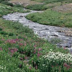 Morgen's Creek