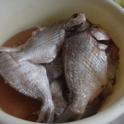 fish waiting to be fried