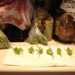 Fresh Herbs for Seasoned Tomatoes
