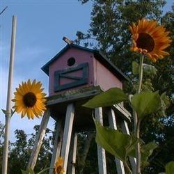 Bridbox with Sunflowers