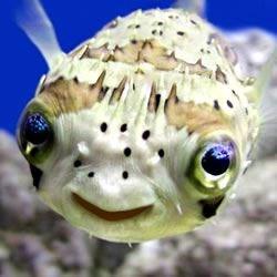 Fishy Thing