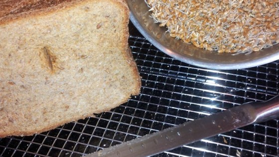 Photo of Essene Bread for the Bread Machine by MARBALET