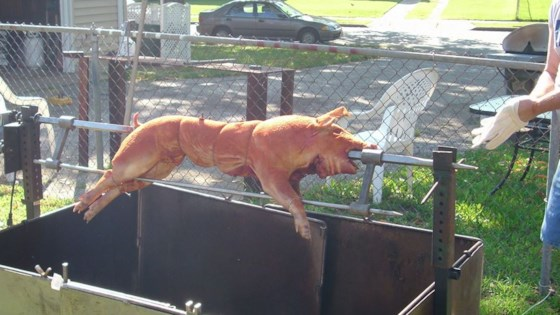 Photo of Roast Suckling Pig by MissJess