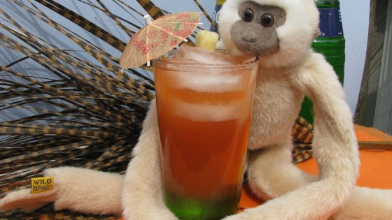 Photo of Drunk Monkey by MIKI