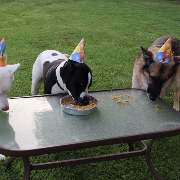 doggie birthday cake photos