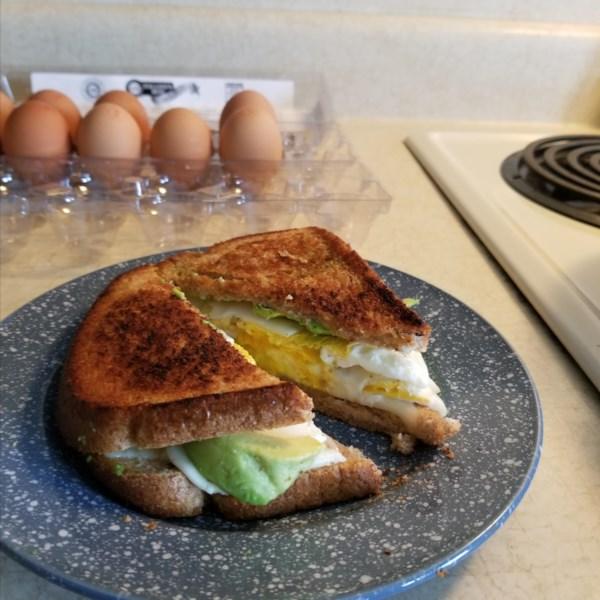 avocado breakfast sandwich photos