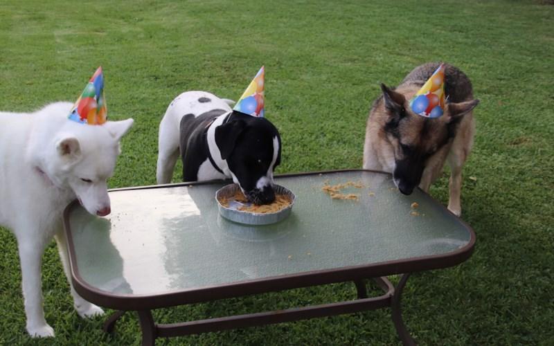 Doggie Birthday Cake